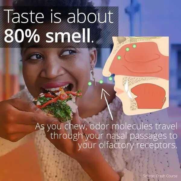 gustul gustul-inseamna-80-la-suta-miros