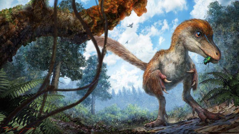 Rămăşiţele unui dinozaur cu pene, descoperite în China