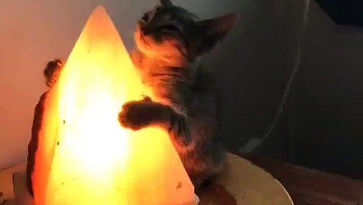 pisica îndrăgostită de o lampă pisica-lampa