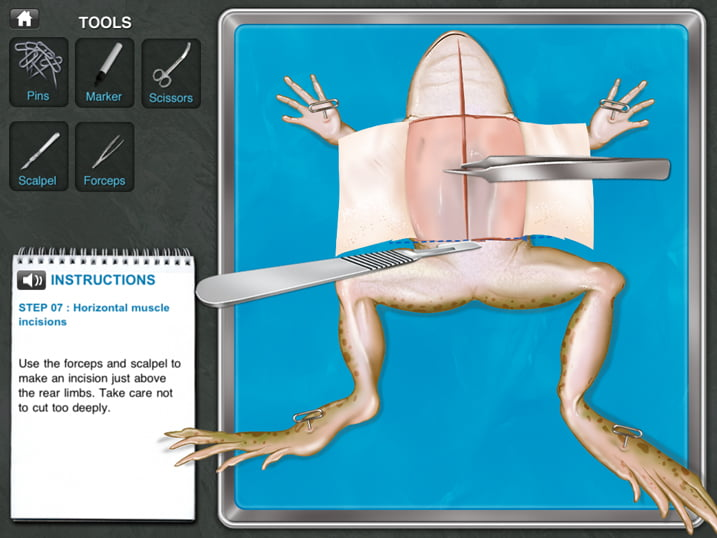 frog-dissection-screen3_b