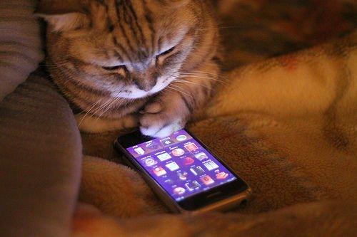 pisica-iphone