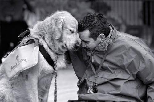 love-dogs