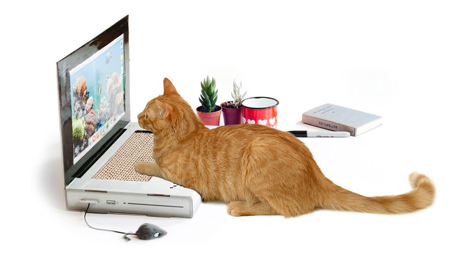 laptopul pentru pisici laptopul-pentru-pisici