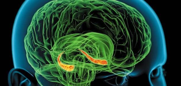 mecanismul cerebral după care functionează amintirile, decriptat