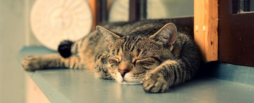 cum iti dai seama daca pisica ta va trai mai mult Cum-iti-dai-seama-daca-pisica-ta-va-trai-mai-mult