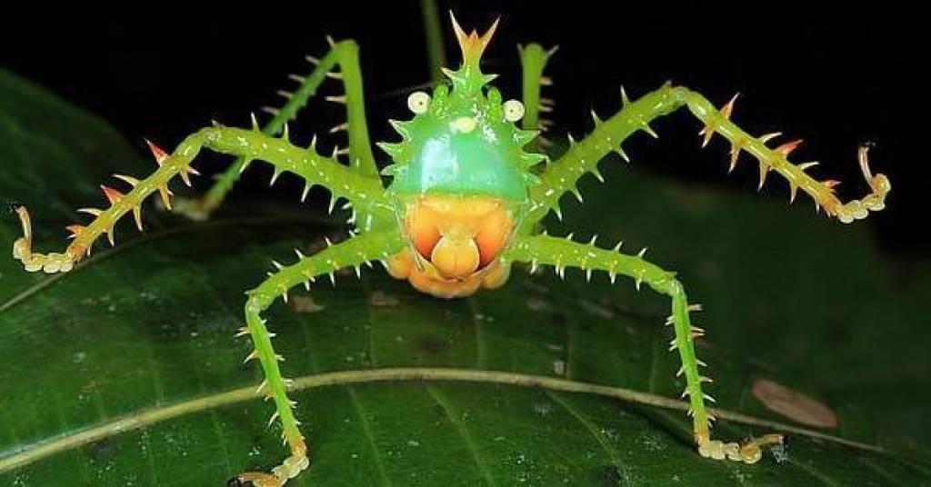 descoperirile cu iz macabru 10-amazing-insect-defensive-tactics-u1