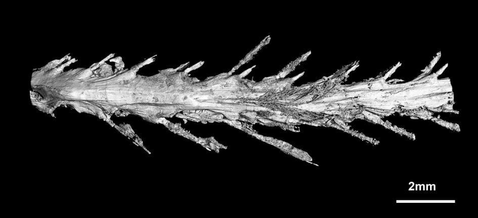 dinozaur cu pene coada-de-dinozaur-2