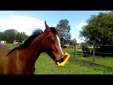 Calul Kruzah Calul-Kruzah