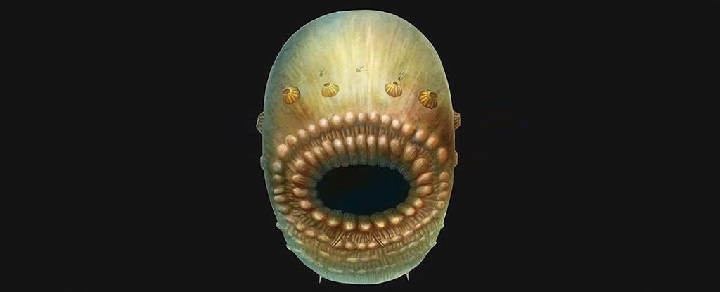 Saccorhytus coronarius. Aşa arată cel mai vechi strămoş al omului
