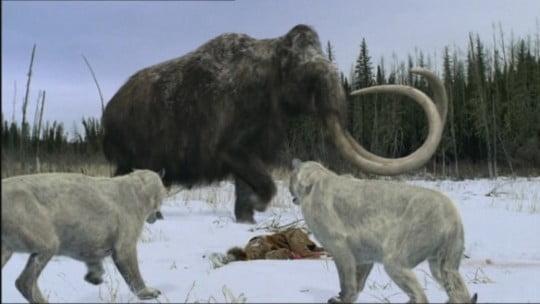 mamuţii mamuti-gadgereport