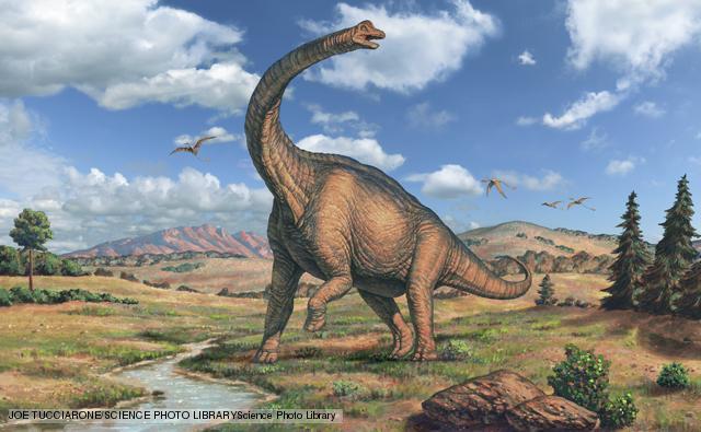 sauropod sauropoda_1