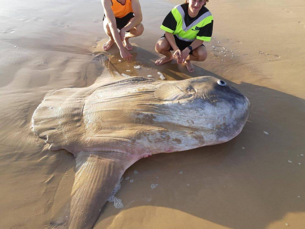 Un pește mai puțin obișnuit, descoperit în Australia